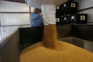 فاو: أسعار الغذاء العالمية تنخفض 3.7% في تموز
