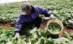 اتحاد غرف الزراعة يحدد أولويات النهوض بالزراعة