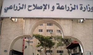 65 ألف طن إنتاج الفستق الحلبي