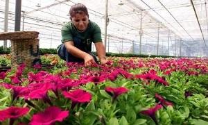 دراسة: اثراء المكاتب بالنباتات يزيد إنتاجية العاملين 15%