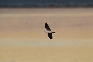 مطعم في استراليا يزود زبائنه ببنادق مياه لإبعاد طيور النورس عن موائدهم