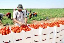 %65  للزراعة و30% للألبان ..خبير: كمية الفاقد السنوي والهدر من الغذاء تصل إلى أرقام عملاقة