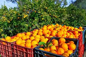 تقرير: تسويق المنتجات الزراعية السورية بلا حلول.. خسائر للفلاح و غلاء للمستهلك
