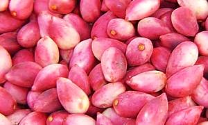 غرفة زراعة حماة: تسويق أكثر من 3000 طن من الفستق الحلبي الممتاز و400 طن من التفاح