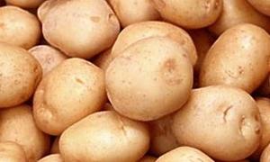 العراق يتصدر مستوردي البطاطا السورية