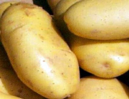 البطاطا اللبنانية إلى سورية بدءاً من أول شهر شباط