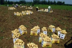 زراعة اللاذقية: تصدير 8529 طناً من المنتجات الزراعية منذ بداية العام