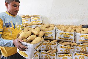 أساليب مُبتكرة لتهريب المنتجات السورية..مثلاً البطاطا المهربة تغزو الأسواق اللبنانية!!
