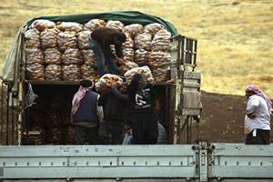 تهريب 4 آلاف طن من البطاطا السورية إلى تركيا عبر الشمال السوري
