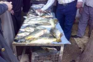 في أسواق ريف دمشق..أسماك عشوائية المصادر ولجنة خاصة للمراقبة