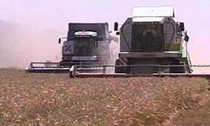 الأمطار ترجيء حصاد القمح في روسيا وترفع أسعاره