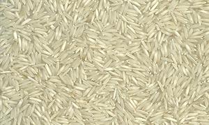 المؤسسة العامة للتجارة الخارجية تريد شراء 135 ألف طن من الرز الابيض القصير