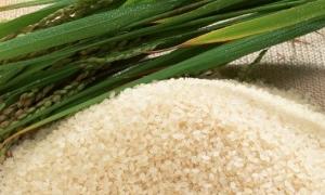 مصر تطرح أول مزايدة علنية لتصدير 100 ألف طن من فائض الأرز