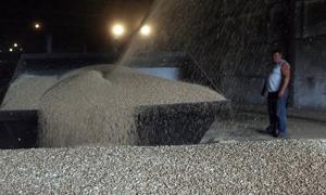 روسيا تصدر 7.2 مليون طن من الحبوب منذ بداية الموسم الجديد