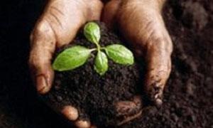 الزراعة تطالب بمخصصات القطن من الأسمدة