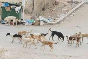 الكلاب تعض أكثر من 6 آلاف سوري..والصحة تقول: لا يتوفر لدينا لقاح ضد داء الكلب!!
