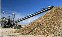 474 ألف طن الشوندر المورد إلى شركة سكر مسكنة