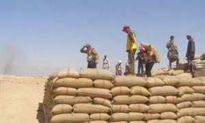 الحكومة تحدد سعر شراء القمح بـ75 ليرة والشعير بـ55 ليرة