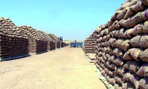 الحكومة السورية تلغي مناقصة لشراء 150 ألف طن من القمح