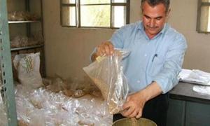 المؤسسة العامة توزع 750 طناً من بذار القمح على فلاحي درعا