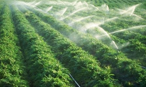 غرف الزراعة: التنمية الزراعية تحتاج لنص تشريعي يحدد أولويتها