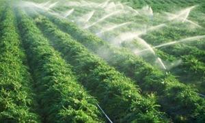 الزراعة المائية تقلل من مشكلات الزراعة التقليدية