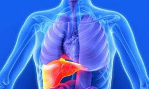 تزايد حالات التهاب الكبد الإنتاني وصحة دمشق تطلق الإنذار المبكر