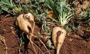 ما سبب الخسائر في قطاع الزراعة السورية؟