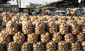 دراسة تكاليف الشحن عبر البحر والجو..الاقتصاد تدرس آلية دعم تصدير محصول البطاطا