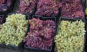 قريباً.. الزراعة تطلق معرض للتفاح والكروم في مدينة السويداء