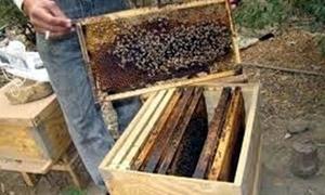 سورية تسمح باستيراد نحل العسل!!