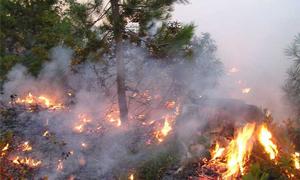 نحو 500 حريق في سورية تطال 19 ألف دونم حتى نهاية شهر تشرين الثاني