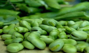 تقرير: انخفاض في أسعار الخضار و الفروج والبيض في أسواق دمشق.. ومونة