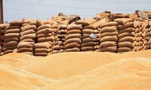 وزير الزراعة: نحو 3.5 ملايين طن  إنتاج القمح المتوقع في سورية