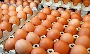 الاقتصاد تدرس زيادة كميات البيض المسموح بتصديرها إلى نحو 3.8 مليون بيضة