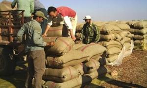 المصرف الزراعي بدير الزور يصرف 325 مليون ليرة للمزراعين قيمة الأقماح المسلمة