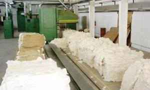 مؤسسة الأقطان تنتهي من حلج 46 طن أقطان محبوبة لشركتين تجاريتين