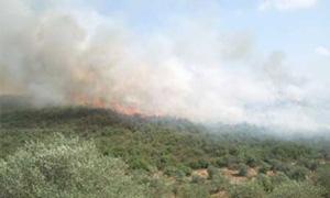حريق يلتهم أكثر من ثلاثين دونماً من أشجار الزيتون في ريف طرطوس