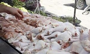 درويش: ارتفاع أسعار الفروج 10% بسبب موجة الحر.. وفقدان للحوم الحبش من الأسواق لمدة 6 أشهر
