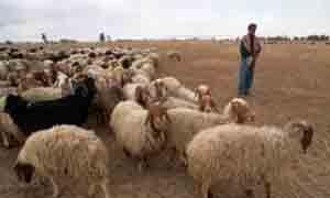 اليونيسيف توزع 35 ألف حقيبة مدرسية لطلاب محافظة دير الزور