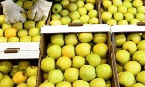 البطاطا بـ40 و البرتقال بـ20 ليرة.. النشرة التفصيلية لأسعار صادرات الخضار والفواكه السورية