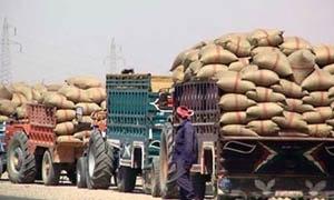 تسويق 1035102 طن من القمح و125470  من الشعير حتى الآن