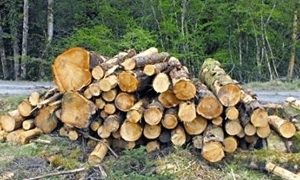 الزراعة تطالب بالحفاظ على الغابات من الاحتطاب والحرائق
