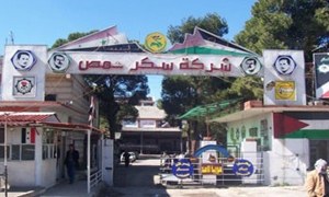 معمل سكر حمص يعاود العمل من جديد ..وتوقعات بإنتاج 12ألف طن سكر أبيض