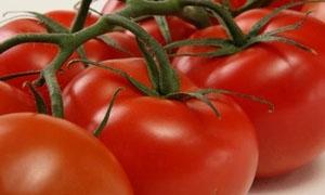 وزارة الزراعة تنفي دخول كميات من البندورة المسرطنة إلى سورية