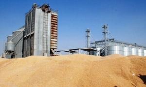 مؤسسة الأعلاف:توريد 335 ألف طن من الشعير و100 الف من الذرة
