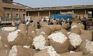 تسويق 650 طنا من الأقطان إلى محلج المعري بإدلب