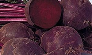 وزارة الزراعة : 2325 هكتار المساحة المزورعة بالشوندر السكري في سورية حتى الآن
