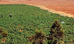 227 مليون ليـرة قيمـة القروض الممنـوحة لمـزارعي السـقيلبية منذ بداية العام الحالي