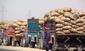 محافظ درعا: تنفيذ 61% من زراعة القمح وتوزيع 70% من طلبات المازوت للمزراعين